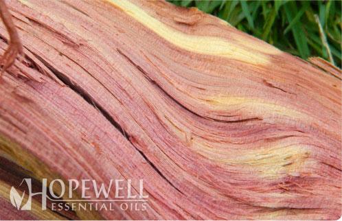 Hopewell Essential Oil Cedarwood Atlas Respiratory
